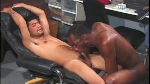 Muscle Cocks - Black Wolf